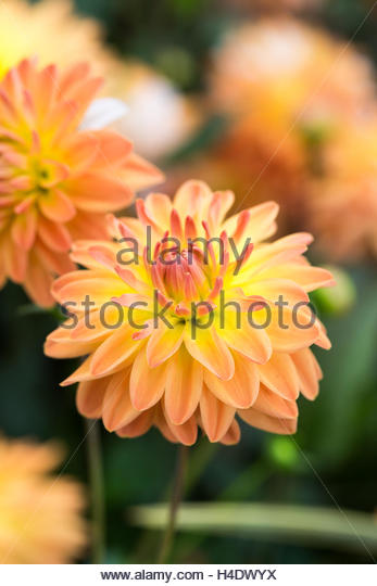 Soleil stock photos soleil stock images alamy - Coup de soleil mobilier ...