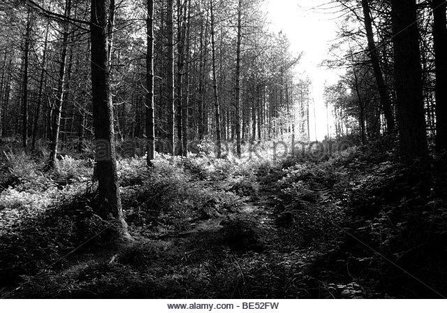 sunlight through trees black - photo #3