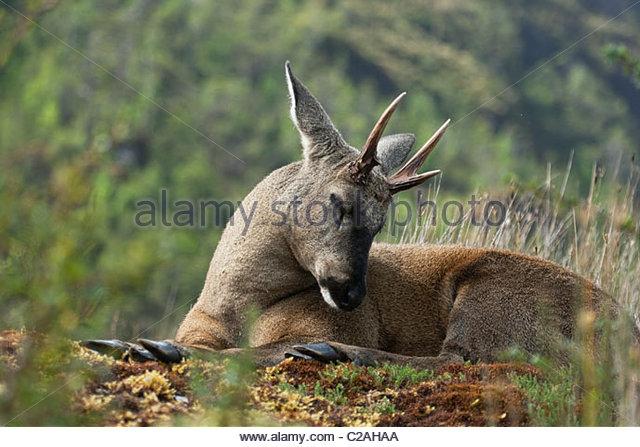 deer providencia thesis
