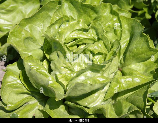 Biologischer Stock Photos & Biologischer Stock Images - Alamy