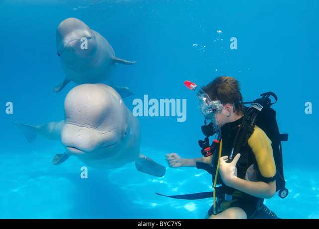 Children Dolphinarium Dolphin Stock Photos & Children ...