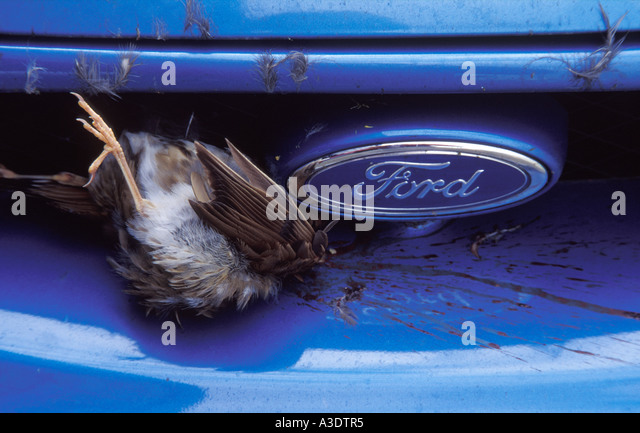 Small dead bird wedged in grille of a car next to Ford badge - Stock Image & Badge Automobile Bird Stock Photos u0026 Badge Automobile Bird Stock ... markmcfarlin.com