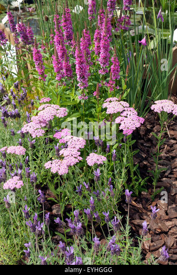 Waterside english pond plant stock photos waterside for Garden trees england