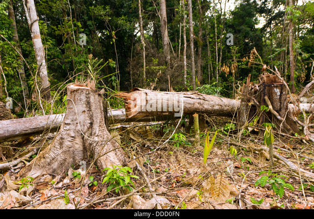 agriculture in the amazon rainforest Brazil's amazon rainforest farmers debate new land law  attention to  discussions about environmentally sound agriculture in their biodiverse.