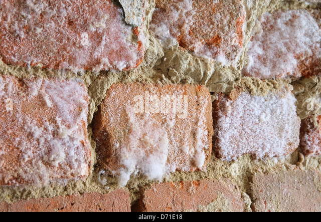 mold wall stock photos mold wall stock images alamy. Black Bedroom Furniture Sets. Home Design Ideas