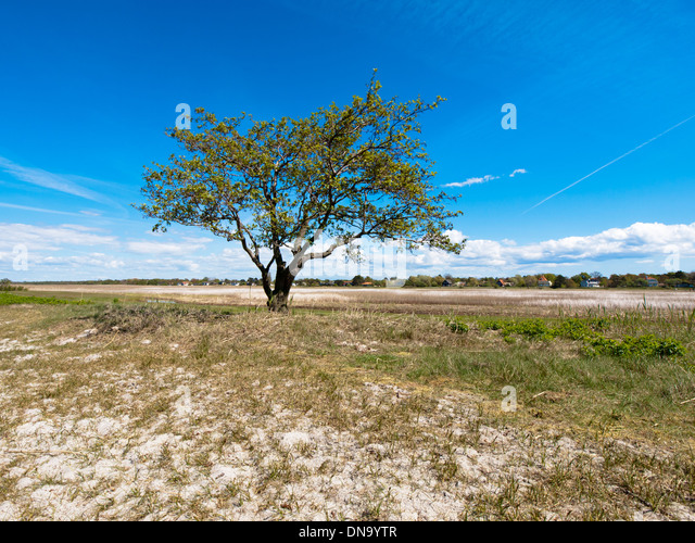 lone tree divorced singles © 2018 jubilee fellowship church 8200 southpark cir littleton, co 80120 3037389416.