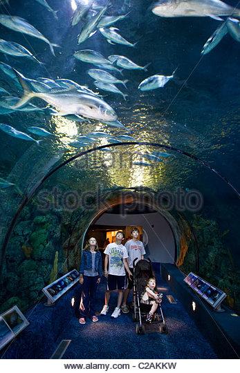 Texas Galveston Moody Gardens Aquarium Stock Photos Texas
