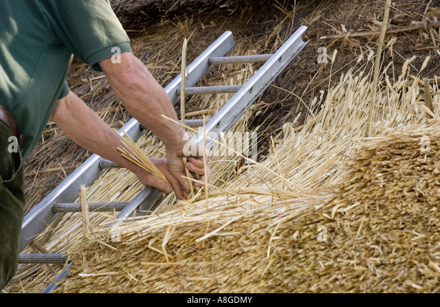 Thatcher inserting spar to new straw thatch on roof - Stock Image & Straw Roof Covering Stock Photos u0026 Straw Roof Covering Stock ... memphite.com