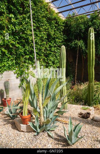 Desert Living Stock Photos Desert Living Stock Images Alamy