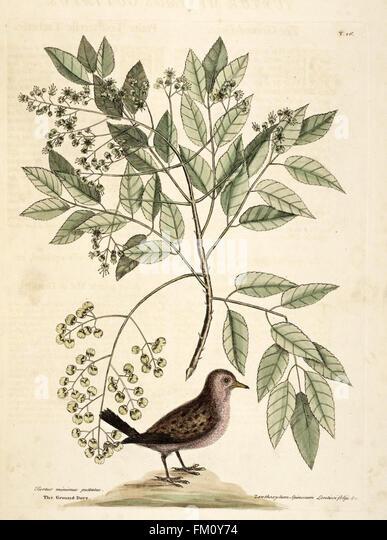 Natural History Of Carolina Florida And The Bahama Islands