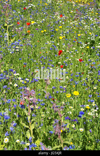 Wildflower Seed Mixes Northeast Region