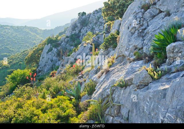 france aude feuilla botanical garden of foncaude a garden with succulent plants - Jardin Sec
