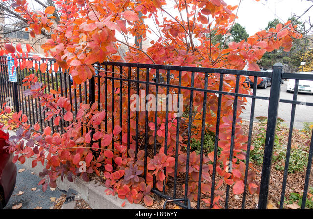 Bush fence stock photos images alamy