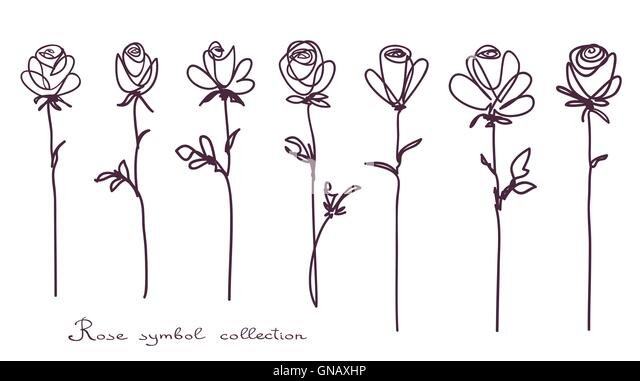Continuous Line Drawing Of A Flower : Continuous line drawing stock photos