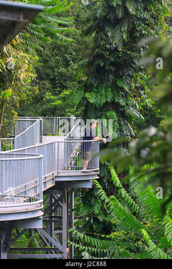 The Mamu Canopy Walkway extends for 350 meters at a height of 15 meters above the & Aerial Rainforest Canopy Walkway Stock Photos u0026 Aerial Rainforest ...