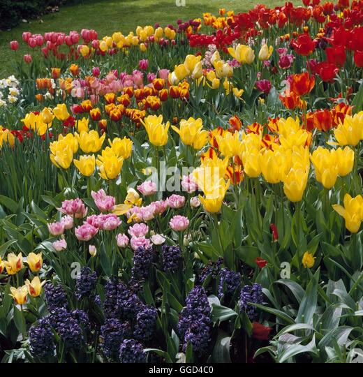 Bulb Garden Please Credit Photos Stock Photos Bulb