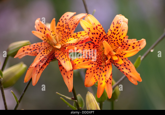 flowers exotic detail rare stock photos  flowers exotic detail, Beautiful flower