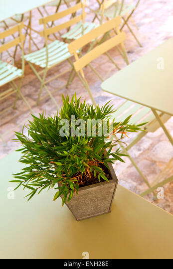 small bamboo on a table on a terrace stock image