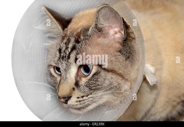 uri cats treatment
