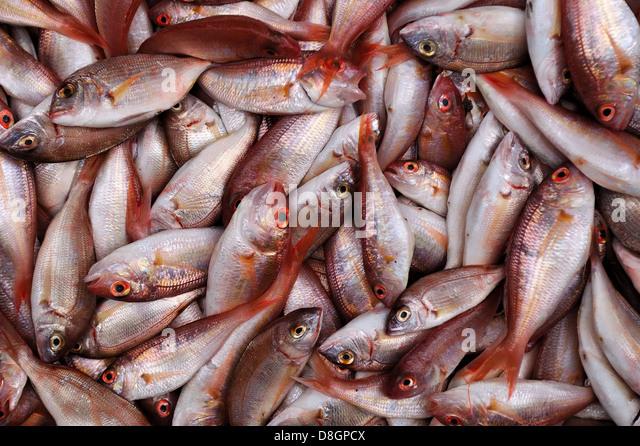 Blue fin sea bream stock photos blue fin sea bream stock for Red sea fish