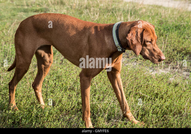 Hund Stock Photos & Hund Stock Images - Alamy