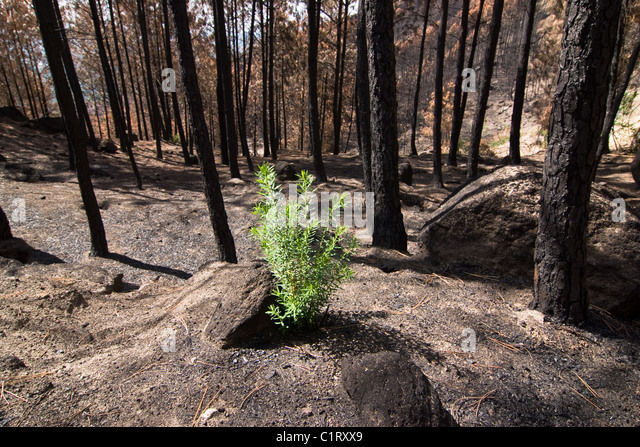 New Plant After Fire Stock Photos & New Plant After Fire ...