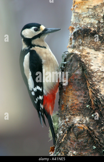how to stop woodpeckers from pecking trees