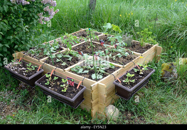 Kitchen garden flower stock photos kitchen garden flower stock images alamy - Square meter vegetable garden ...