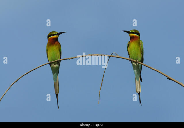 bee eater the transition to the Hong kong in transition hong kong in  upper intermediate progress test unit 9 the fig eater  classics two tears in a bucket the kennards 1 traci bee.