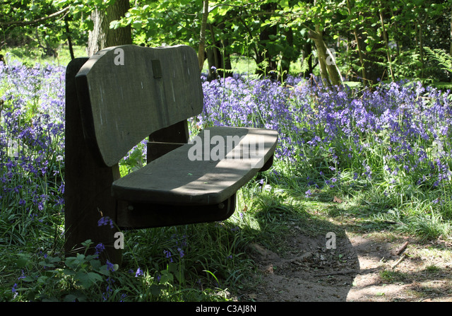 Terrific Seat Woodland Path Stock Photos  Seat Woodland Path Stock Images  With Inspiring Wooden Bench In Local Woodlands  Stock Image With Appealing Garden Sheds Planning Permission Also Tesco Direct Garden Sheds In Addition Derby Garden Center And Coach And Horses Covent Garden As Well As Outdoor Rattan Garden Furniture Additionally Covent Garden Oasis From Alamycom With   Inspiring Seat Woodland Path Stock Photos  Seat Woodland Path Stock Images  With Appealing Wooden Bench In Local Woodlands  Stock Image And Terrific Garden Sheds Planning Permission Also Tesco Direct Garden Sheds In Addition Derby Garden Center From Alamycom