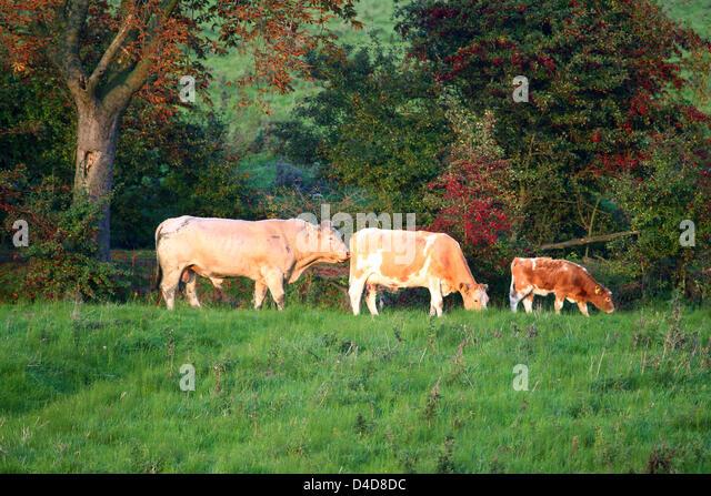 Hinrich Stock Photos Amp Hinrich Stock Images Alamy