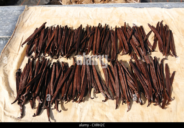 vanilla production Other vanilla growing regions do not come close to madagascar's production  levels indonesia may produce 150 tonnes in 2017, according to.