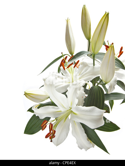 lillies funeral stock photos  lillies funeral stock images  alamy, Beautiful flower