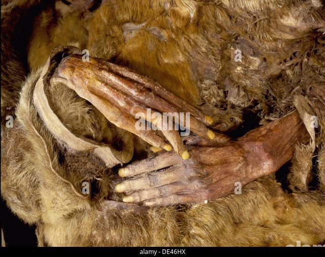 Mummification Stock Photos & Mummification Stock Images - Alamy