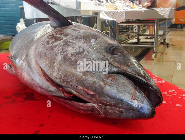 Fish Market Huge Stock Photos Fish Market Huge Stock
