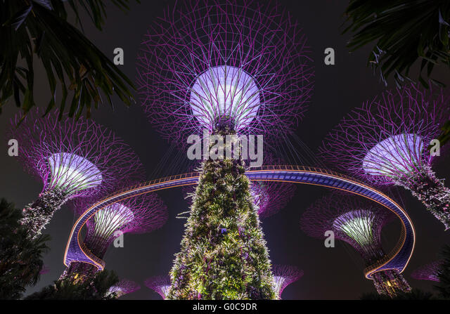 The Supertree Grove During The Evening Garden Rhapsody Sound And Light Show  At The Gardens By