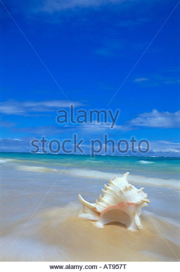Oahu Beach Sand And Shells Stock Photos Oahu Beach Sand And