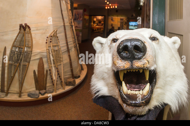 Native tent and polar bear at Parks Canada Visitor Centre in Churchill MB - Stock & Bear At Tent Stock Photos u0026 Bear At Tent Stock Images - Alamy