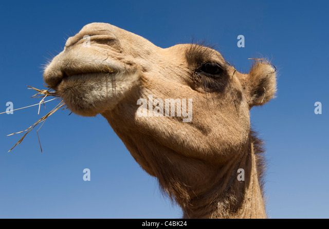 Berbera Stock Photos and Pictures | Getty Images
