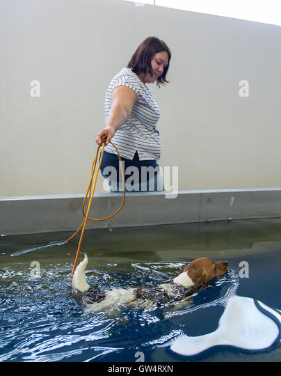 Coach Swimming Pool Stock Photos Coach Swimming Pool Stock Images Alamy