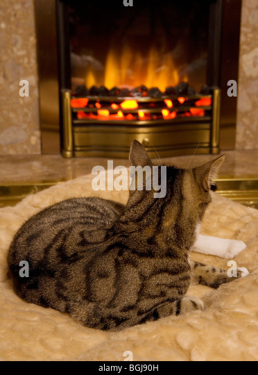 Cat Indoors Fireplace Stock Photos & Cat Indoors Fireplace Stock ...