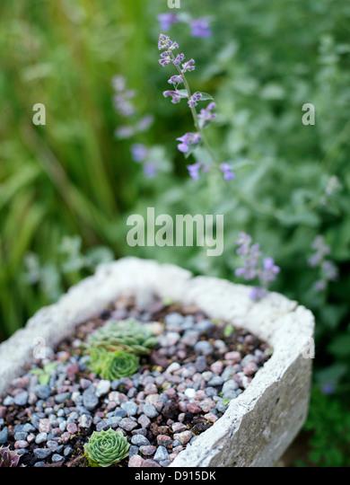 Flourishing Garden Stock Photos Flourishing Garden Stock Images