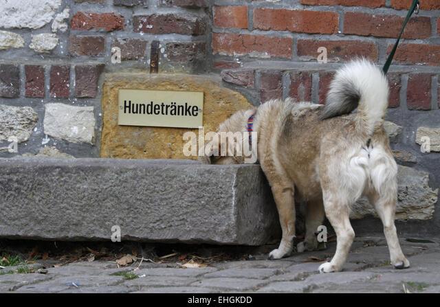 Hundetränke Stock Photos & Hundetränke Stock Images - Alamy