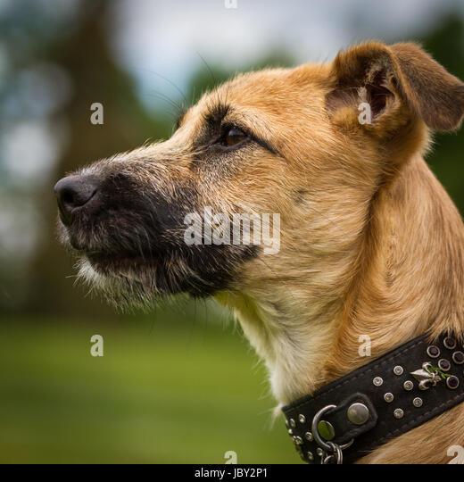 schöne halsbänder hund