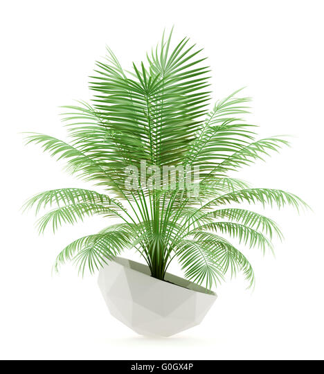 Potted Palm Stock Photos Amp Potted Palm Stock Images Alamy