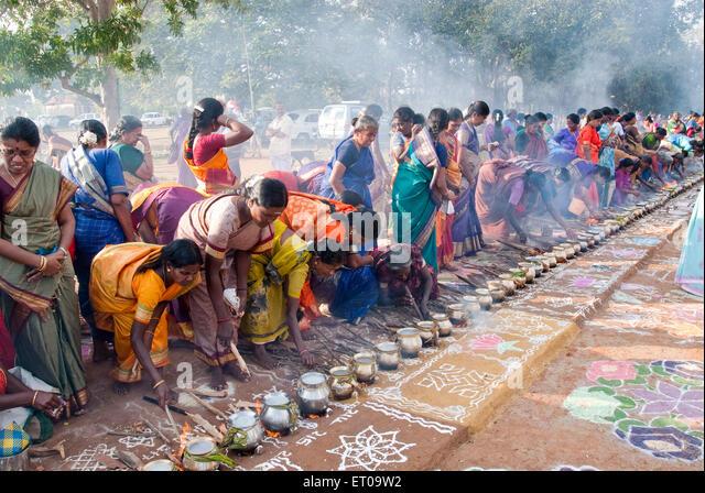 thai pongal festival