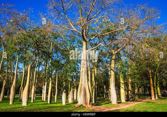 Ceiba speciosa stock photos ceiba speciosa stock images for Jardines del real valencia
