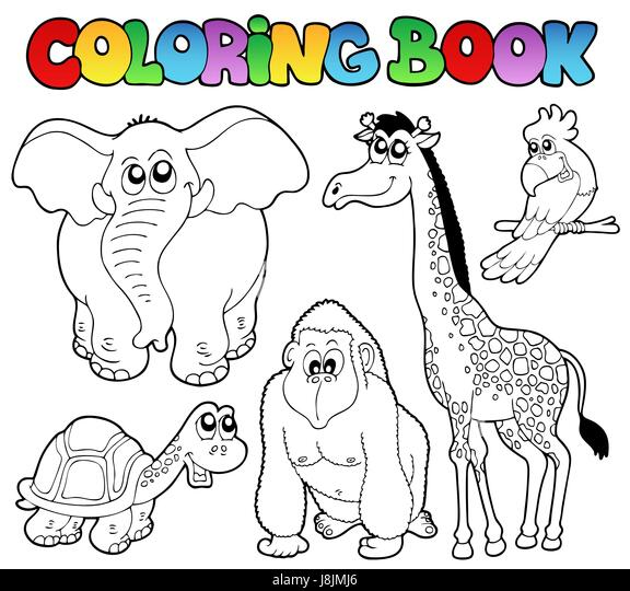 Colour Animal Paint Tropical Painted Colouring Tropic Book