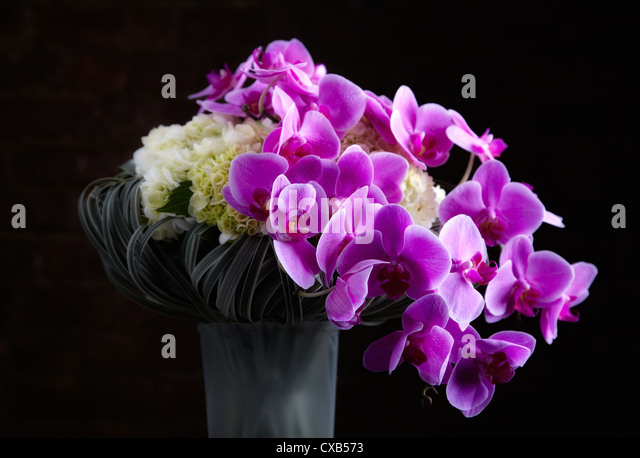Orchids Vase Stock Photos & Orchids Vase Stock Images - Alamy