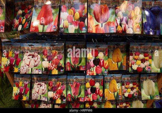 Tulip Seeds Stock Photos Amp Tulip Seeds Stock Images Alamy